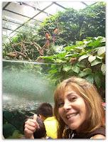 Papagallos y un acuario en el bosque tropical