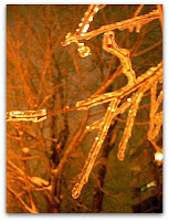 Una rama envuelta por el hielo
