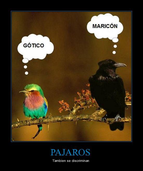 Especial+para+el+ornitologo.jpg