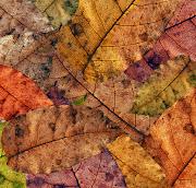 . de otoño, coincidiendo con una noche y un día con una duración igual. photoxpress