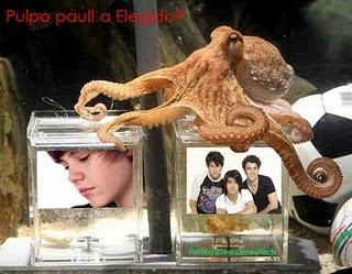 Todo sobre la vida de los famosos  El pulpo Paul nunca falla
