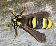 Hornet Moth. There will be more posts to follow soon.