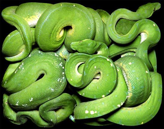 jungle life: Green snacks beautifull snacks