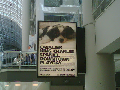 Cavalier King Charles Spaniel Downtown Playday Billboard at the Eaton Centre in Toronto