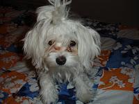 HARLEY (my baby)