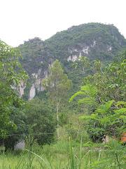 Langur Cliff Face