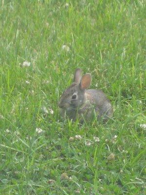 [bunny]
