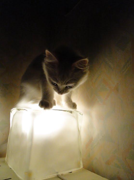Le blog winter miaaaou la lampe de chevet for La lampe de chevet