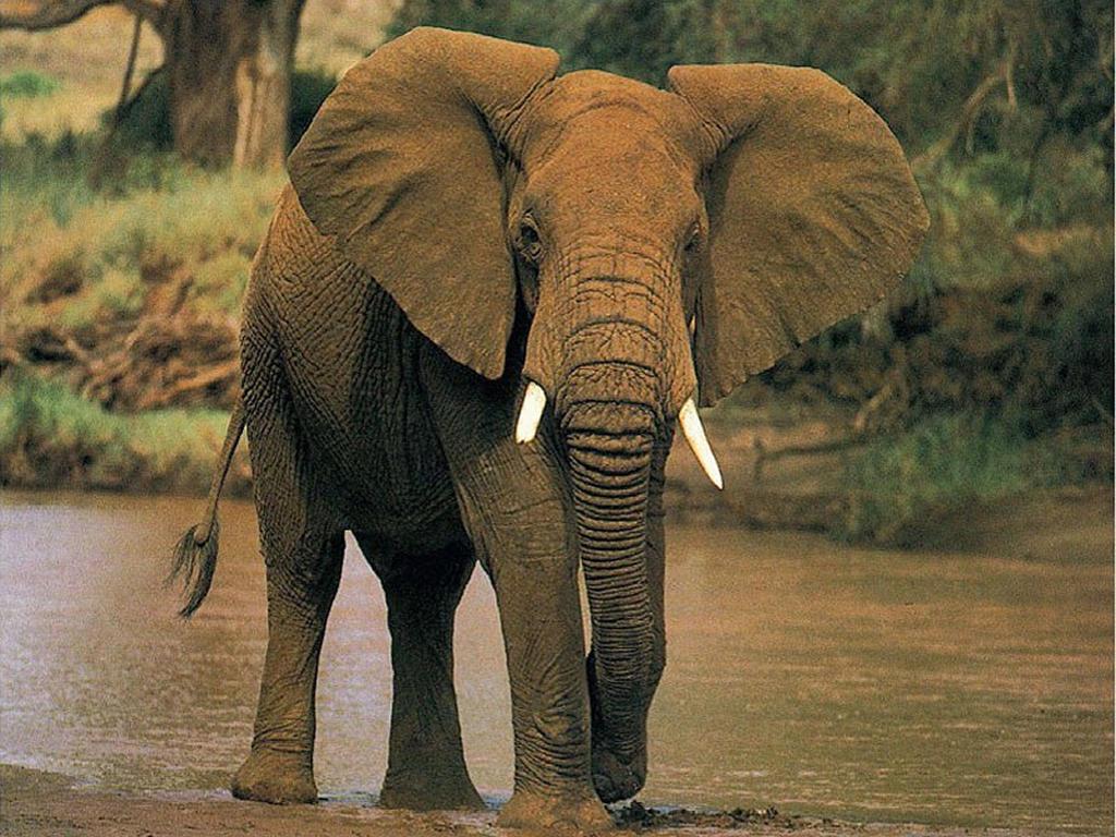 Los animales mas impresionantes