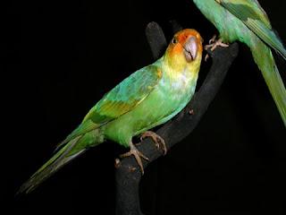 Solo los puede ver en fotografías Animales extintos KienyKe - fotos de animales extintos