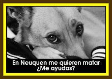 ¡Paremos la matanza de perros en Neuquén!