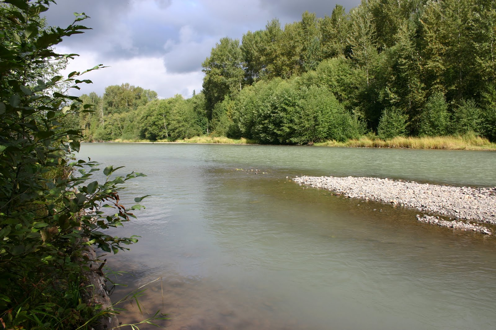 Osprey steelhead news great article on nisqually and for Nisqually river fishing