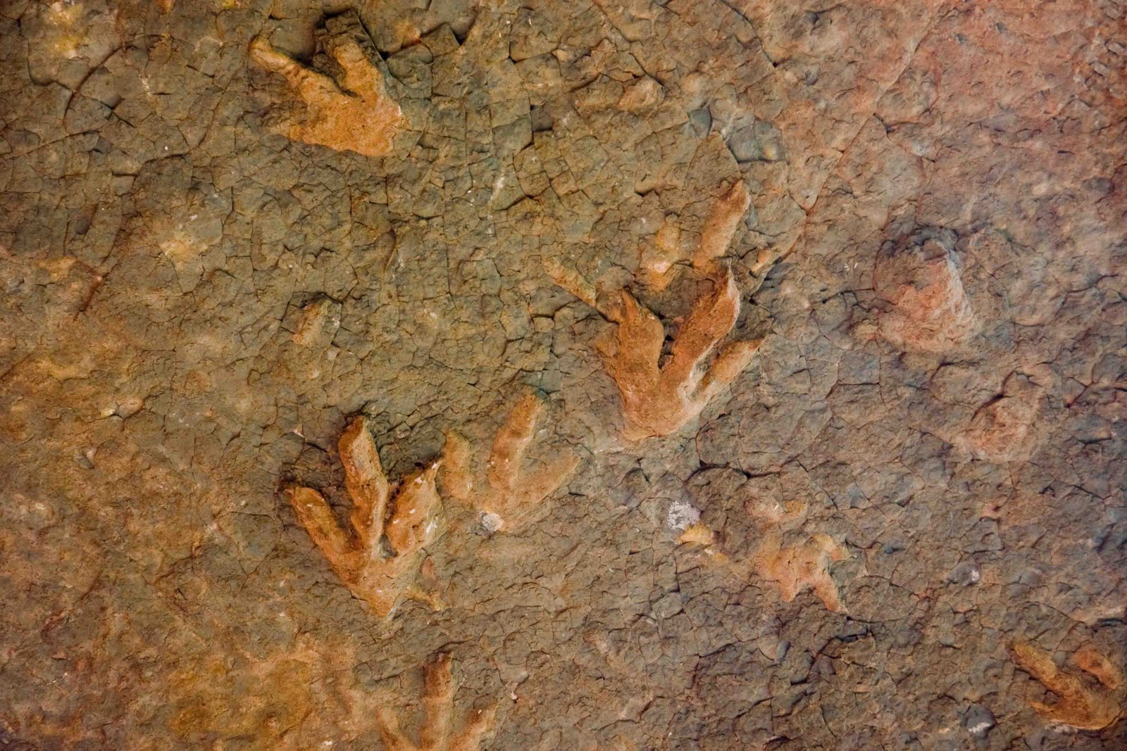 Dinosaur Footprints in Lesotho photo by Gerald Allan Davie