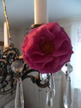 En vacker ros