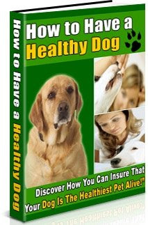 how to have a healthy dog