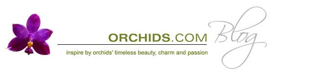 Orchidsdotcom