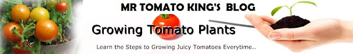 Mr Tomato King