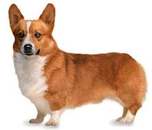 Mr Corgi - Zero Point Energy PET HEALTH.
