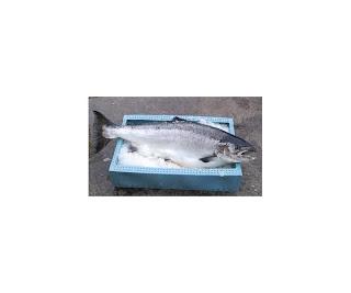 Fiskeri med garn og ruser