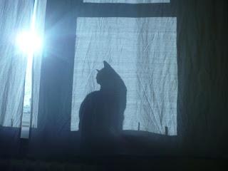 Poczatek ferii wg kotów