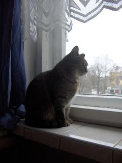 Kot oswojony