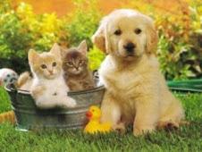 Se hacen mascotas por encargo.