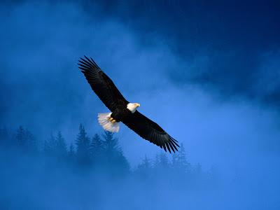 Wallpaper Of Eagle. dresses Eagle Wallpapers.