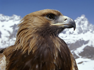 eagle wallpapers. Eagle Wallpapers