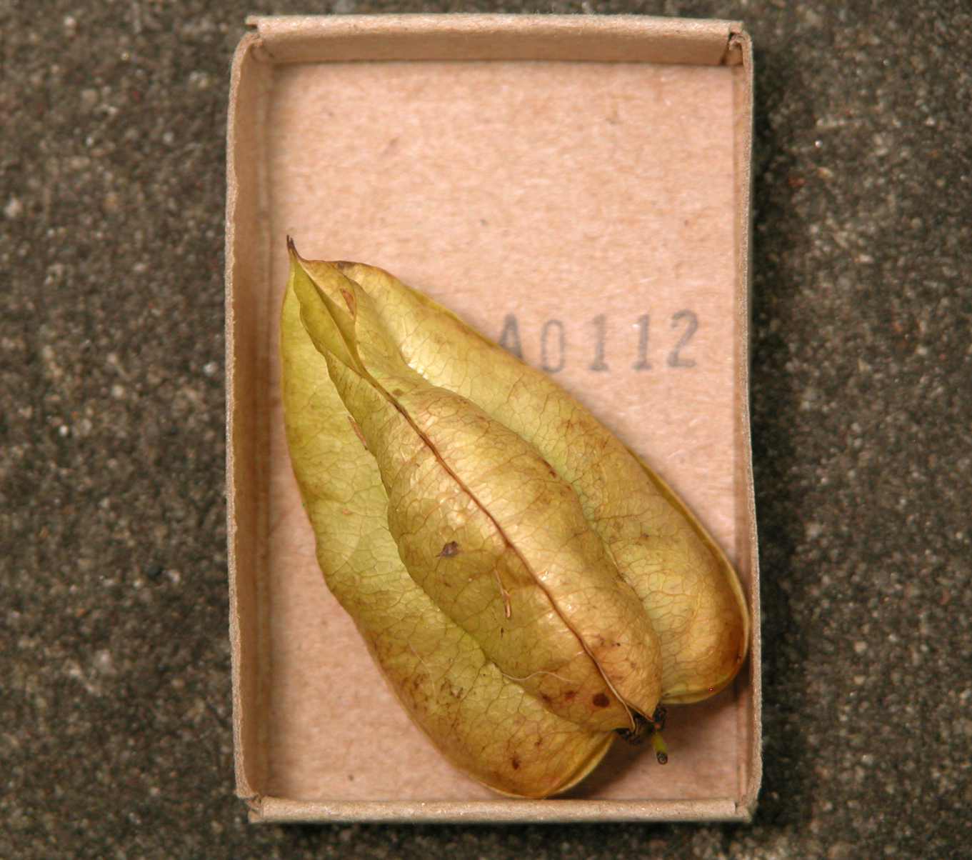 Mississippi Sisters Matchbox Gallery 52 Seed Pods