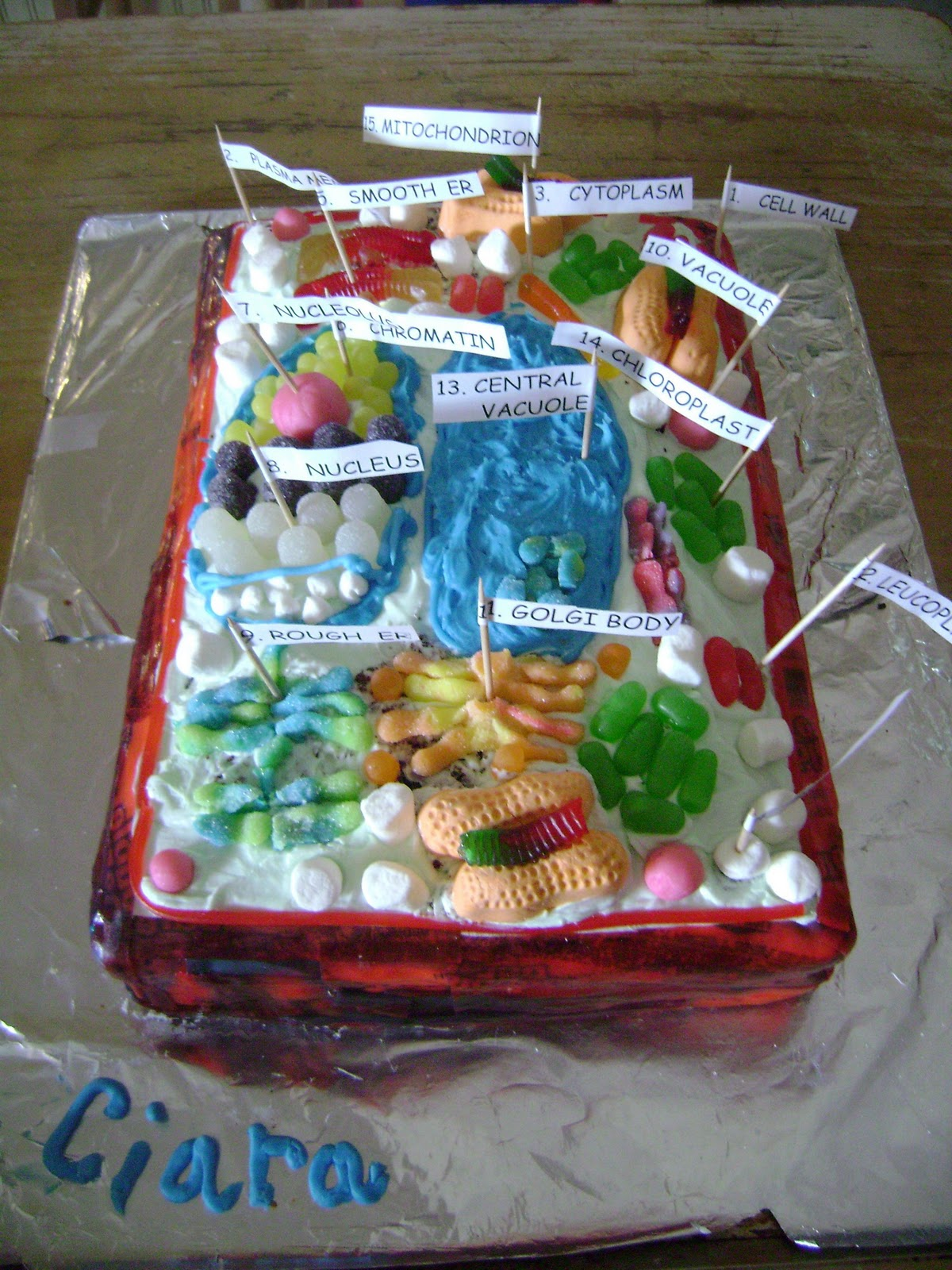 Dylan made an animal cell out of cake with fondant for the organelles.