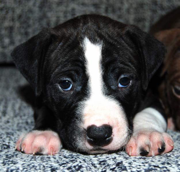 аллергия на собачьи лакомства у человека
