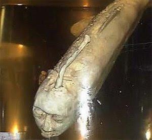 Resultado de imagen para un pez humano