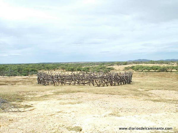 corrales de chivos semejan coronas de espinas gigantes