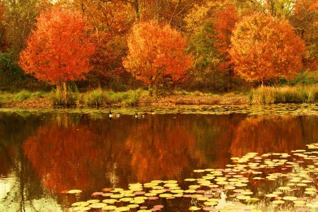 Travel team travel secrets best places for fall foliage for Best fall destinations in the us
