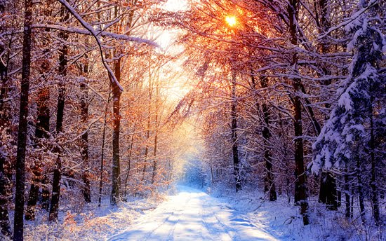 Winter nature photo