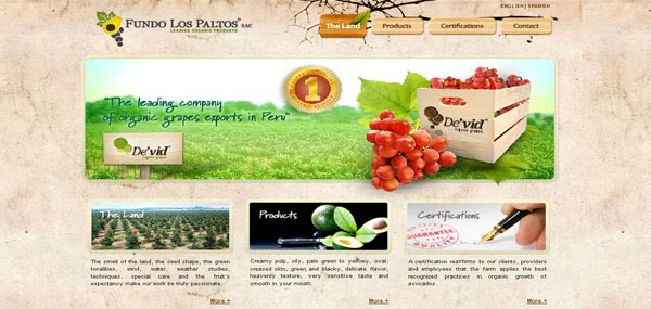 Fundo Los Paltos Web Design
