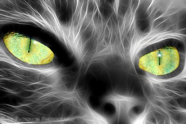 My Kittys Pretty Eyes by Jim Patterson