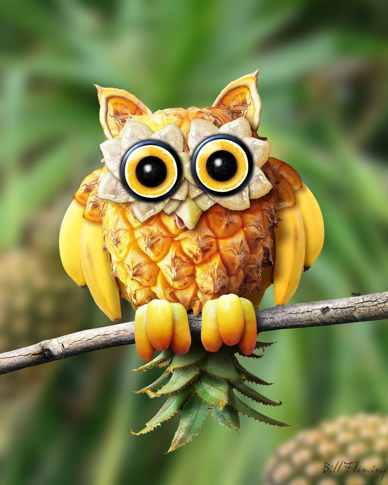 Fruit Hoot by Bill Fleming