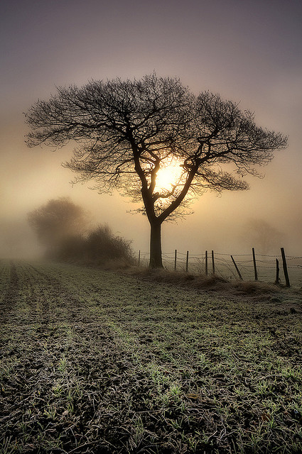 The Art Of Photographing Tree | Amazing Photo Seen On  www.coolpicturegallery.us