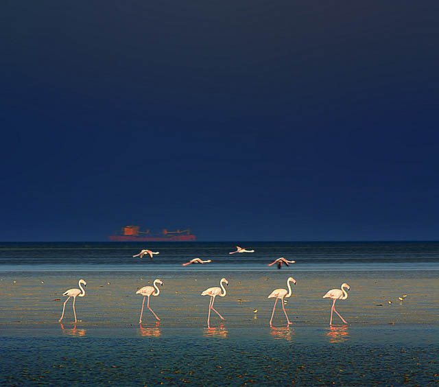 flamingo fashion show