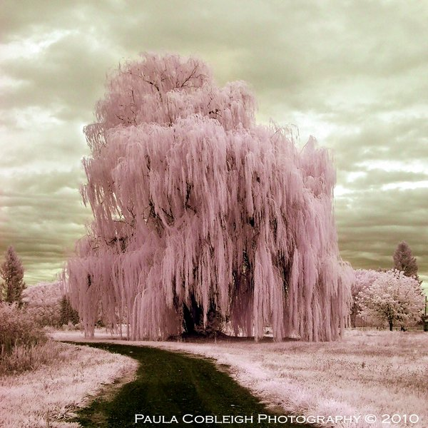 21 Digital Infrared Photography 25 Great IR Shots