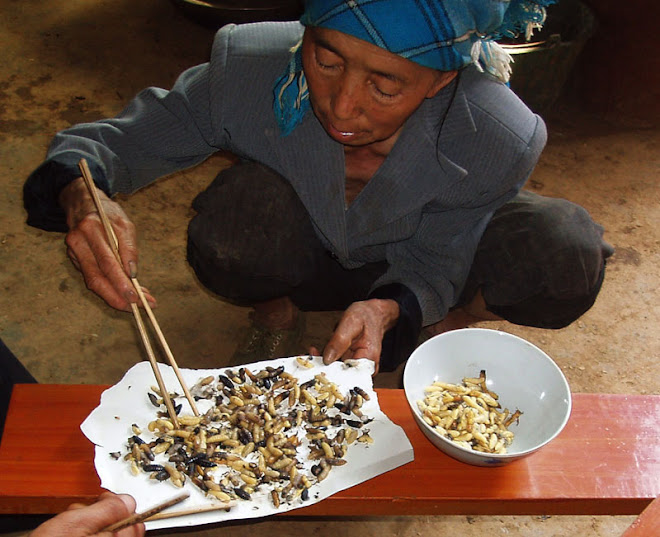Preparing Bee Larvae for the table