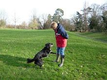 Trick training a 3 legged dog