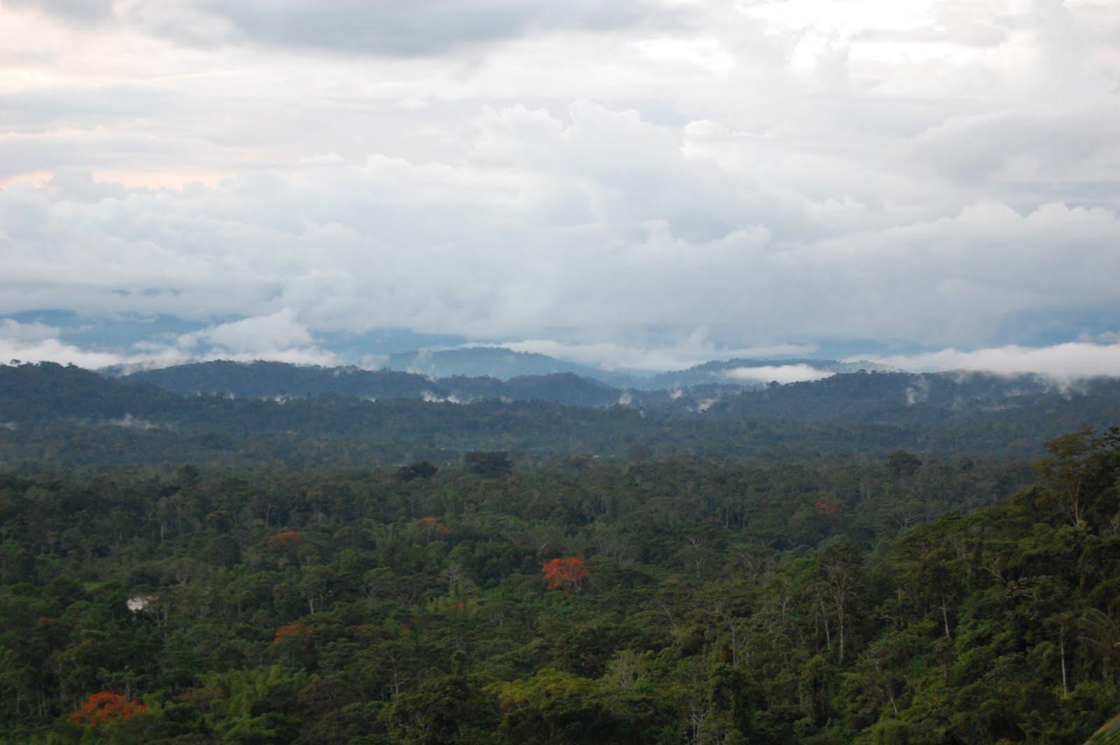 [Help+save+the+rainforest+2.JPG]