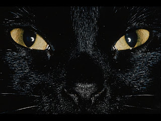 go to Cute Cat Pictures: Cats - Black Cat Evil Eyes