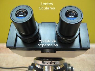 partes del microscopio. Partes del Microscopio óptico