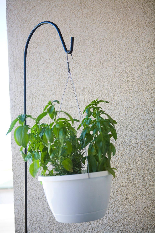 vegans living off the land indoor hanging potted plants. Black Bedroom Furniture Sets. Home Design Ideas