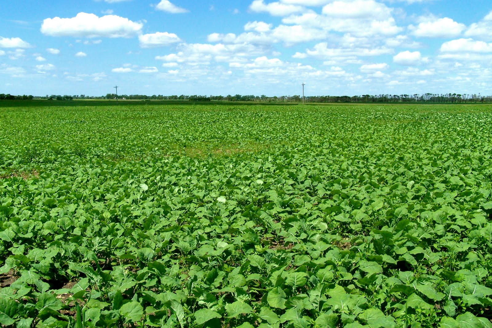 how to grow alfalfa hay in texas