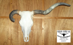 Cow Skull - Goemmer 138