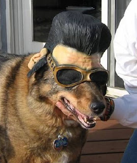 Watch Dogs Dressed In Peels Bug